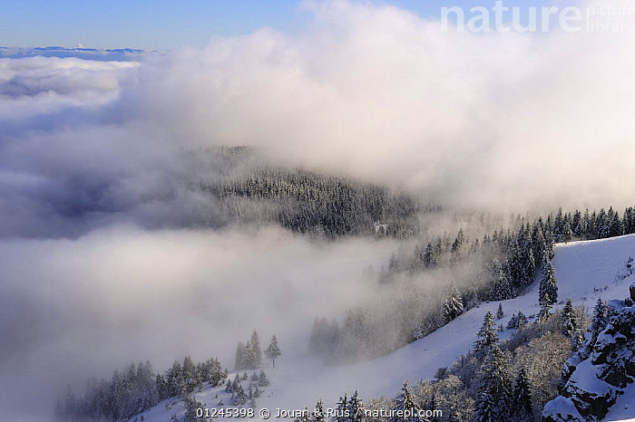 View from the Tanet, Ballon des Vosges Nature Park, Vosges, Lorraine, France, January 2009, CLOUDS,EUROPE,FORESTS,FRANCE,LANDSCAPES,RESERVE,SNOW,TREES,WINTER,Weather,PLANTS, Jouan & Rius