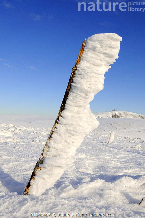 Frost covered vegetation on Kastelberg summit, Ballon des Vosges Nature Park, Vosges, Lorraine, France, December 2008, EUROPE,FRANCE,FROST,ICE,LANDSCAPES,RESERVE,SNOW,VERTICAL,WEATHER,WIND,WINTER, Jouan & Rius