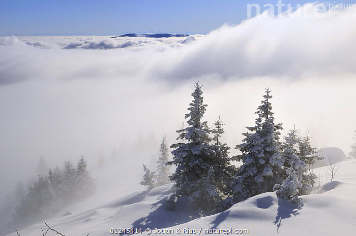 Cloudy valley viewed from the Tanet, Ballon des Vosges Nature Park, Vosges, Lorraine, France, January 2009, CLOUDS,EUROPE,FRANCE,LANDSCAPES,MIST,RESERVE,SNOW,TREES,WINTER,Weather,PLANTS, Jouan & Rius