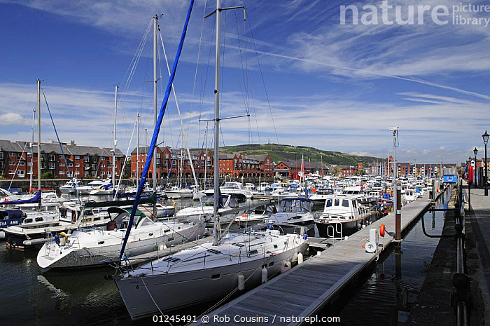 The Marina, Maritime Quarter, Swansea, Wales, UK. June 2009., EUROPE,MARINAS,MOORED,PONTOONS,SAILING BOATS,TOWNS,UK,WALES,YACHTS,BOATS , United Kingdom, United Kingdom, Rob Cousins