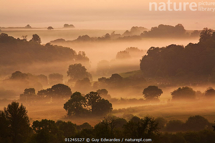 Dawn over rural countryside, view from Cadbury Castle, South Cadbury, Somerset, England, September 2008, ATMOSPHERIC,COUNTRYSIDE,EUROPE,LANDSCAPES,MIST,UK, United Kingdom, Guy Edwardes