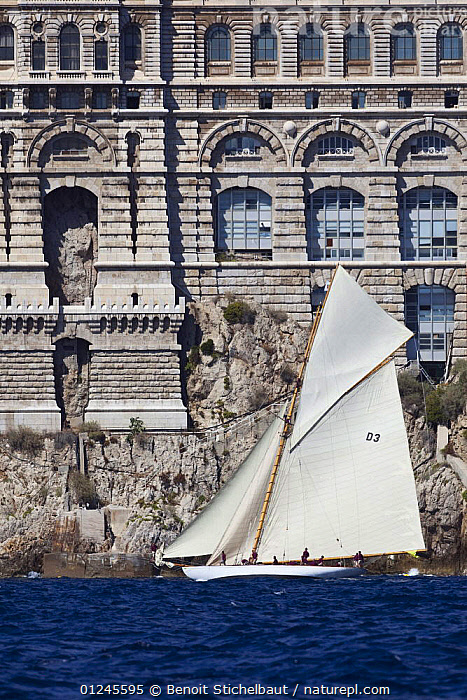 "15M Fife cutter ""Tuiga"" sailing past the Oceanographic Museum and Aquarium, at her centenary, Monaco Classics Week, September 2009., BUILDINGS,CLASSICS,COASTS,CUTTERS,GAFF,HISTORICAL,MEDITERRANEAN,PROFILE,SAILING BOATS,VERTICAL,YACHTS,BOATS , SAILING-BOATS , SAILING-BOATS , SAILING-BOATS , SAILING-BOATS, Benoit Stichelbaut"
