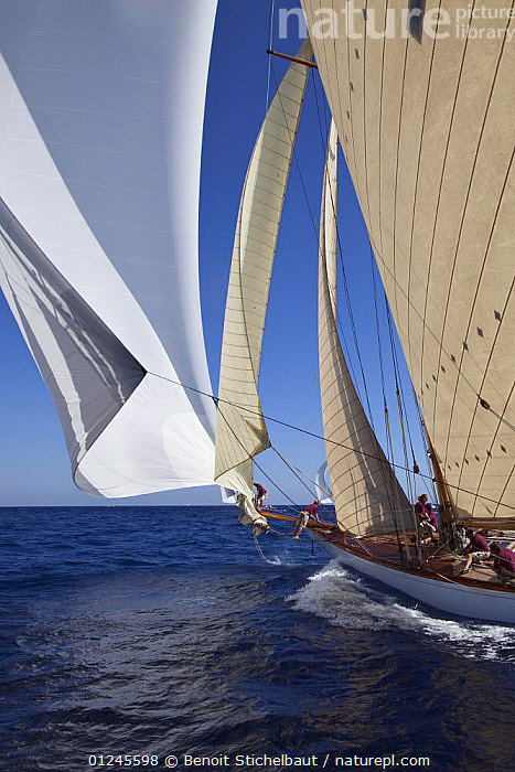 """15M Fife cutter """"Tuiga"""" sailing at her centenary, Monaco Classics Week, September 2009., BOWMAN,BOWSPRITS,CLASSICS,CUTTERS,FORESAILS,HISTORICAL,MEDITERRANEAN,SAILING BOATS,SPINNAKERS,VERTICAL,YACHTS,CREWS ,BOAT-PARTS,BOATS , SAILING-BOATS ,SAILS , SAILING-BOATS, Benoit Stichelbaut"""