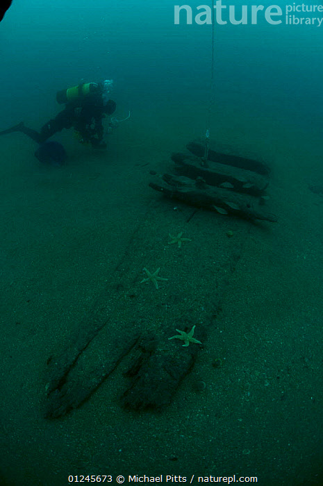Diver working near the uncovered hull of an unidentified sailing ship off the south coast, UK.. September 2009.  ,  BOATS,DIVING,EUROPE,HISTORICAL,HULLS,MARINE,PEOPLE,SEA BED,TEMPERATE,UK,UNDERWATER,VERTICAL,WRECKS,BOAT-PARTS, United Kingdom, United Kingdom, United Kingdom, United Kingdom, United Kingdom  ,  Michael Pitts