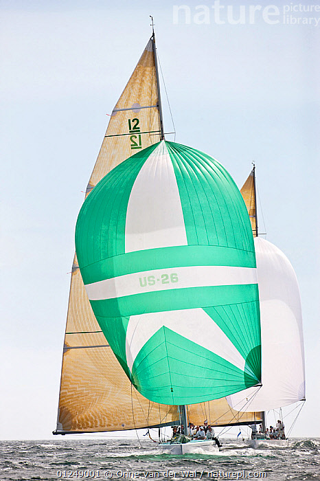 Yachts racing under spinnaker at the 12 Metre World Championships, Newport, Rhode Island, USA. September 2009.  ,  12 METERS,12 METRES,CHOPPY,FRONT VIEWS,GREEN,LIGHT,METER,NORTH AMERICA,SAILING BOATS,SPINNAKERS,USA,VERTICAL,YACHTS,BOATS,SAILING-BOATS,SAILS ,core collection xtwox  ,  Onne van der Wal