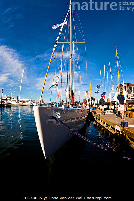 Wide angle view of yacht moored in marina. 12 Metre World Championships, Newport, Rhode Island, USA. September 2009.  ,  12 METERS,12 METRES,BOWS,FRONT VIEWS,LINES,MARINAS,METER,MOORED,MOORING LINES ,NORTH AMERICA,PONTOONS,SAILING BOATS,USA,VERTICAL,WIDE ANGLE SHOT,YACHTS,BOATS,SAILING-BOATS  ,  Onne van der Wal