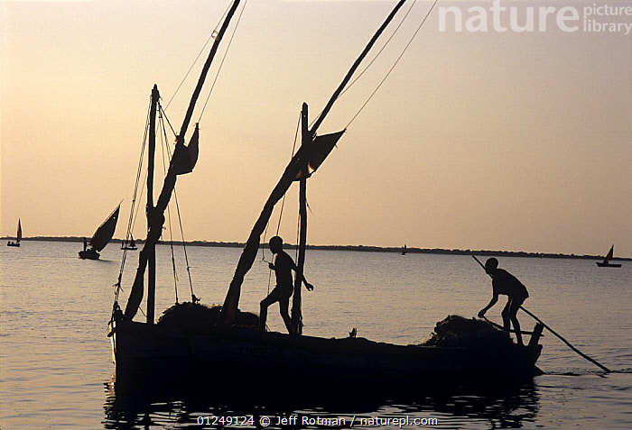Fishermen return from night of gill netting onboard a dhow, Vilankulo, Mozambique, November 2008  ,  BOATS,COASTS,DAWN,FISH,FISHERIES,FISHERMAN,FISHING,PEOPLE,SILHOUETTES,SOUTHERN AFRICA,SUNRISE,TRADITIONAL,TROPICAL  ,  Jeff Rotman
