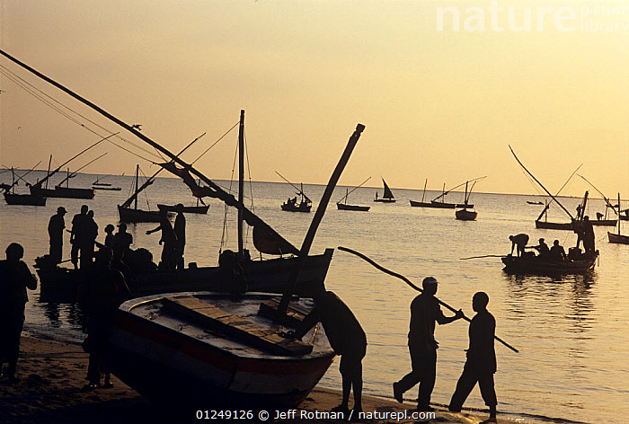 Fishermen return from night of gill netting onboard dhows, Vilankulo, Mozambique, November 2008  ,  BOATS,COASTS,DHOW,FISH,FISHERIES,FISHING,PEOPLE,SILHOUETTES,SOUTHERN AFRICA,TRADITIONAL,TROPICAL  ,  Jeff Rotman