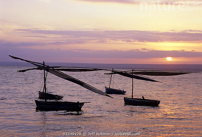 Fishing dhows at anchor off coast of Vilankulo, Mozambique, November 2008  ,  ANCHORED,COASTS,DHOWS,FISHING,FOUR,LANDSCAPES,SILHOUETTES,SOUTHERN AFRICA,SUNRISE,TRADITIONAL,BOATS, SAILING-BOATS , SAILING-BOATS , SAILING-BOATS  ,  Jeff Rotman