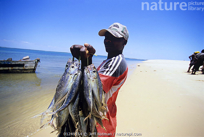 Fisherman bringing fish catch home, Inhassoro, Mozambique, November 2008  ,  BEACHES,COASTS,FISH,FISHERMEN,HOLDING,LANDSCAPES,PEOPLE,PORTRAITS,SOUTHERN AFRICA,TRADITIONAL  ,  Jeff Rotman