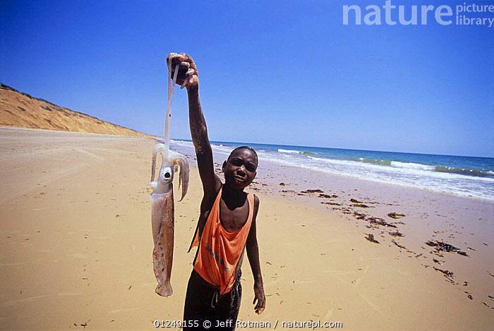 Fisherman holds up a large squid from his fish catch, Inhassoro, Mozambique, November 2008  ,  BEACHES,CEPHALOPODS,COASTS,FISHING,HOLDING,INVERTEBRATES,MAN,MOLLUSCS,PEOPLE,PORTRAITS,SOUTHERN AFRICA,VERTICAL,YOUNG  ,  Jeff Rotman