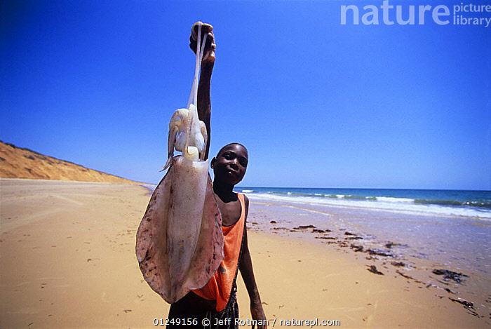 Fisherman holds up a large squid from his fish catch, Inhassoro, Mozambique, November 2008  ,  BEACHES,CEPHALOPODS,COASTS,FISHING,HOLDING,INVERTEBRATES,LANDSCAPES,MAN,MOLLUSCS,PEOPLE,PORTRAITS,SOUTHERN AFRICA,YOUNG  ,  Jeff Rotman