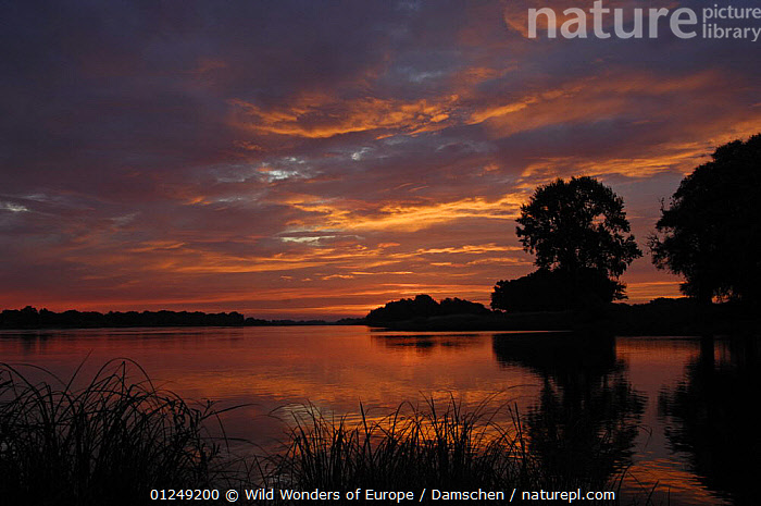 River Elbe at sunset, Elbe Biosphere Reserve, Lower Saxony, Germany, August 2007  ,  ATMOSPHERIC,DIETER DAMSCHEN,EUROPE,GERMANY,LANDSCAPES,RED,REFLECTIONS,RESERVE,RIVERS,SILHOUETTES,SUNSET,TREES,WWE,PLANTS  ,  Wild Wonders of Europe / Damschen