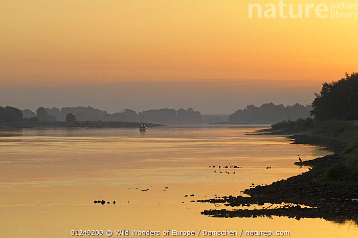 Elbe River at sunrise, Elbe Biosphere Reserve, Lower Saxony, Germany, August 2008  ,  BOATS,DIETER DAMSCHEN,EUROPE,LANDSCAPES,ORANGE,RESERVE,RIVERS,SILHOUETTES,SUNRISE,WWE  ,  Wild Wonders of Europe / Damschen