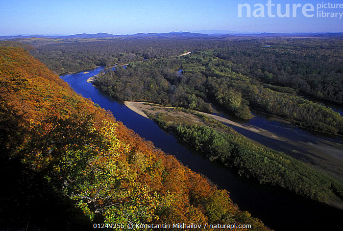 Looking down on the Bikin River, taiga woodland and the Sikhote-Alin Mountain Range in autumn, Ussuriland, Primorsky, Far East Russia, October 2006  ,  ASIA,AUTUMN,FOREST,LANDSCAPES,RIVERS,RUSSIA,TAIGA,WOODLANDS  ,  Konstantin Mikhailov