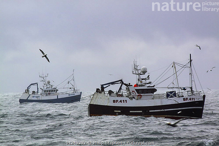 "Banff registered pair trawlers ""Beryl"" and ""Onward"" fishing for Haddock on the North Sea, July 2009.  ,  BOATS,EUROPE,FISHERIES,FISHING BOATS,MFVs ,North Sea,PROFILE,TRAWLERS,two, WORKING-BOATS , WORKING-BOATS  ,  Philip Stephen"