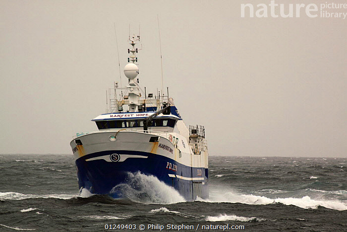 "Peterhead registered stern trawler ""Harvest Hope"" heading for the North Sea fishing grounds. September 2009.  ,  BOATS,CHOPPY,EUROPE,FISHERIES,FISHING BOATS,North Sea,SPRAY,TRAWLERS, WORKING-BOATS , WORKING-BOATS  ,  Philip Stephen"