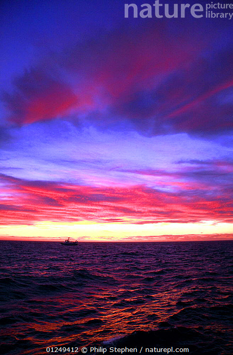 Trawler at dusk on the North Sea, September 2009.  ,  ALONE,BOATS,CLOUDS,DUSK,EUROPE,FISHERIES,FISHING BOATS,North Sea,PINK,PURPLE,SKY,SMALL,SUNSET,TRAWLERS,VERTICAL,CONCEPTS,Weather, WORKING-BOATS , WORKING-BOATS ,SIZE  ,  Philip Stephen