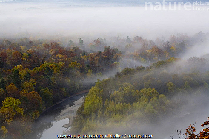 The valley of the River Bikin with Riparian Elm-Ash-Korean Pine forest, Ussuriland, Primorsky, Far East Russia, October 2006.  ,  FOREST,HIGH ANGLE SHOT,LANDSCAPES,MIST,RIVERS,RUSSIA,WOODLANDS  ,  Konstantin Mikhailov