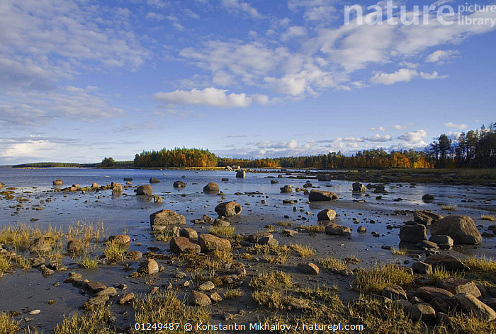 Shores of a inlet of the White Sea, Karelia, N Russia, September 2007  ,  COASTS,EUROPE,LANDSCAPES,RUSSIA,CIS  ,  Konstantin Mikhailov