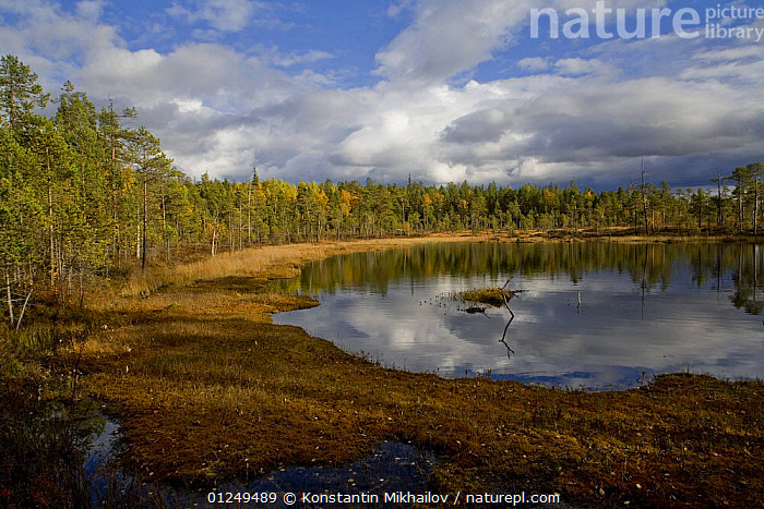 Upland swamp beside an inlet of the White Sea, Karelia, N Russia, September 2007  ,  COASTS,EUROPE,LANDSCAPES,RUSSIA,SWAMPS,Wetlands  ,  Konstantin Mikhailov