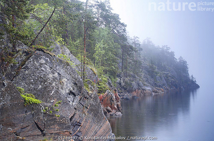 Typical vegetation on the rocky shore of an inlet of the White Sea, Karelia, N Russia, July 2009  ,  COASTS,EUROPE,MIST,ROCKS,RUSSIA,TREES,WEATHER ,CIS,PLANTS  ,  Konstantin Mikhailov