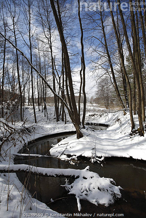 Winter landscape with Black / Common alder trees {Alnus glutinosa} growing beside river, Central Russia, March 2008  ,  BETULACEAE,DICOTYLEDONS,LANDSCAPES,PLANTS,RIVERS,SNOW,VERTICAL,WINTER  ,  Konstantin Mikhailov