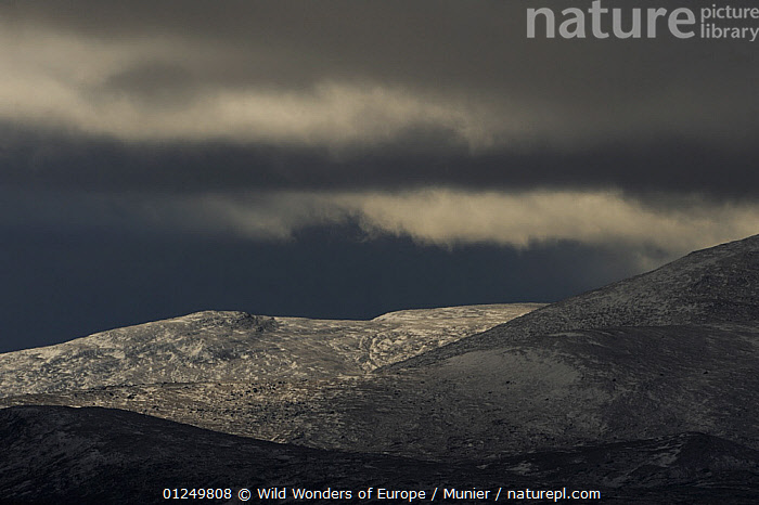 Hills in the Forollhogna National Park covered in a thin layer of snow against a dark storm sky, Norway, September 2008  ,  bad,CLOUDS,EUROPE,LANDSCAPES,NORWAY,NP,RESERVE,SCANDINAVIA,SNOW,stromy,TUNDRA,vincent munier,WEATHER,WWE, Scandinavia,National Park  ,  Wild Wonders of Europe / Munier