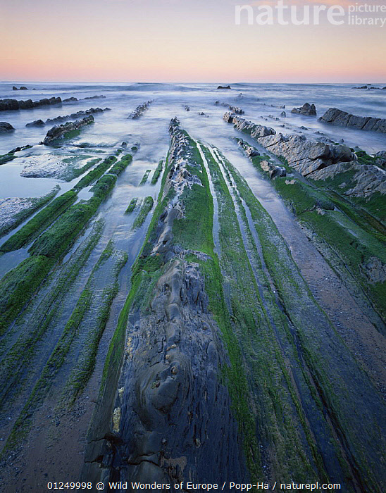 Rock formations on Barrika beach at low tide, Bilbao, Basque country, Spain, October 2008  ,  ATLANTIC,BAY OF BISCAY,BEACHES,COASTS,EUROPE,GEOLOGY,LANDSCAPES,ROCK FORMATIONS,SPAIN,VERENA POPP HACKNER,VERTICAL,WWE,Marine  ,  Wild Wonders of Europe / Popp-Ha