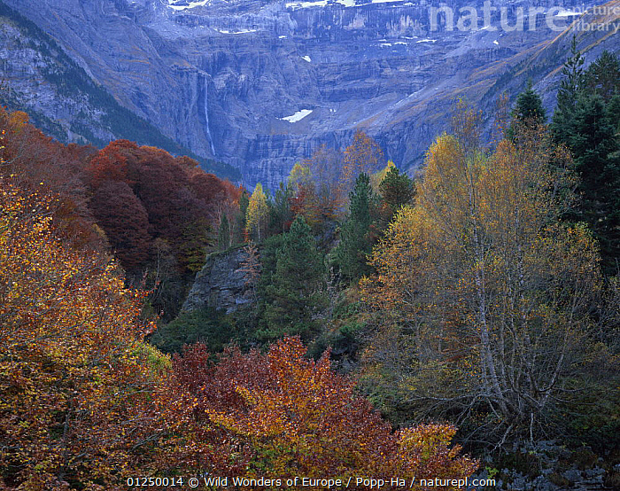 Forest in the Cirque de Gavarnie, Pyrenees, France, October 2008  ,  AUTUMN,EUROPE,FORESTS,FRANCE,GEOLOGY,LANDSCAPES,ROCK FORMATIONS,TREES,VERENA POPP HACKNER,WATERFALLS,WWE,PLANTS  ,  Wild Wonders of Europe / Popp-Ha