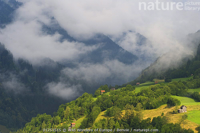 Low clouds over meadows surrounded by trees, with small farm buildings near Fliess, Naturpark Kaunergrat, Tirol, Austria, July 2008  ,  ALPINE,alps,AUSTRIA,BUILDINGS,CLOUDS,EUROPE,FARMLAND,LANDSCAPES,MIST,niall benvie,RESERVE,TREES,WWE,Weather,PLANTS  ,  Wild Wonders of Europe / Benvie