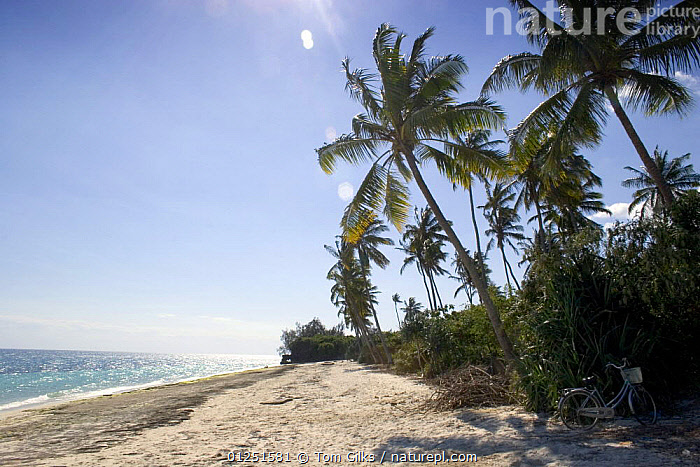 Beach on west coast Zanzibar, Tanzania. August 2008.  ,  AFRICA,BEACHES,COASTS,EAST AFRICA,ISLANDS,LANDSCAPES,PALM TREES,TREES,TROPICAL,PLANTS  ,  Tom Gilks