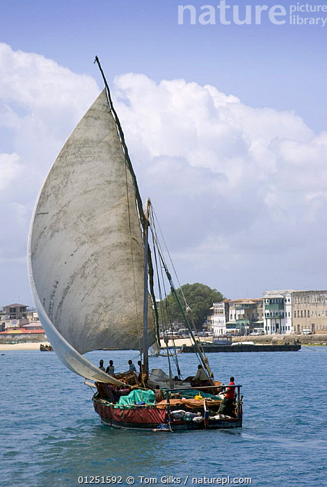 Traditional Dhow, Stone Town, Zanzibar, Tanzania August 2008  ,  AFRICA,BOATS,CARGO BOATS ,COASTS,DHOWS,EAST AFRICA,FREIGHT BOATS,LATEEN RIGS,REAR VIEWS,SAILING BOATS,TRADITIONAL,VERTICAL, WORKING-BOATS , SAILING-BOATS , SAILING-BOATS , WORKING-BOATS , SAILING-BOATS  ,  Tom Gilks
