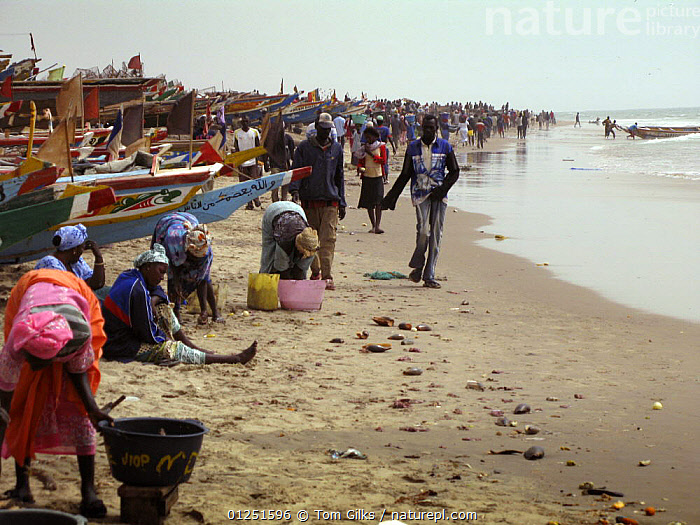 Fishing boats along coast at Kafountine, Casamance region, Senegal. April 2008.  ,  AFRICA,BEACHES,BOATS,COASTS,CROWDED,DRY LAND,FISHING BOATS,PEOPLE,WEST AFRICA  ,  Tom Gilks