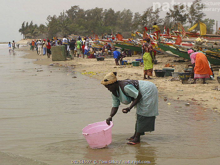 Woman washing bowl next to fishing boats, Kafountine, Casamance region, Senegal. April 2008.  ,  AFRICA,BEACHES,COASTS,CROWDED,PEOPLE,WEST AFRICA,WOMEN  ,  Tom Gilks