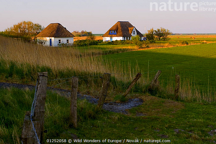 Houses with reed roofs, Around Westerhever, Germany, April 2009  ,  BUILDINGS,EUROPE,GERMANY,HOMES,LANDSCAPES,L�szl� Nov�k,TRADITIONAL,WWE  ,  Wild Wonders of Europe / Novák