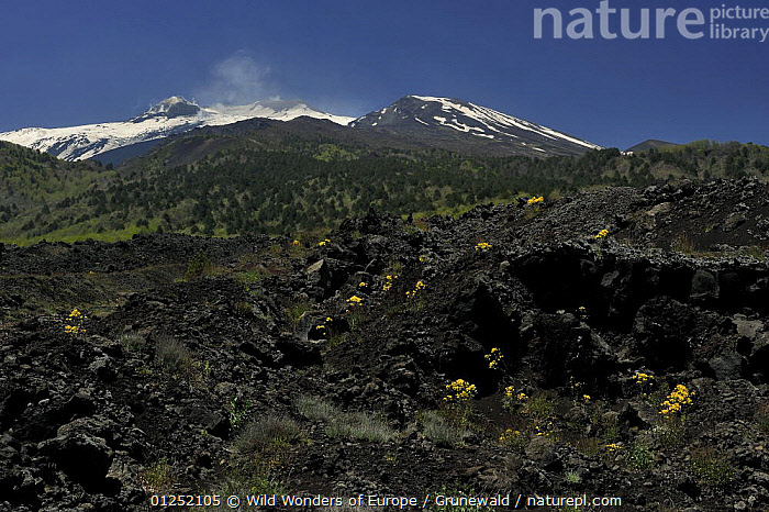 Old lava flow on the eastern side of Mount Etna volcano, Sicily, Italy, May 2009  ,  Active,EUROPE,ITALY,LANDSCAPES,Lava,Olivier Grunewald ,SICILY,SNOW,TREES,VOLCANOES,WWE,PLANTS,Geology  ,  Wild Wonders of Europe / Grunewald