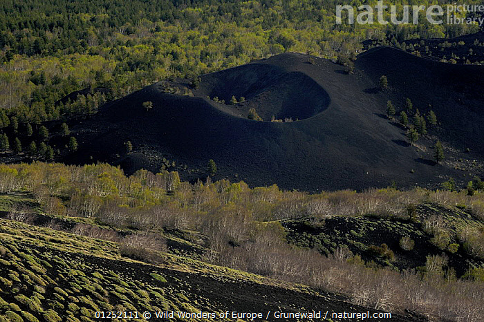 "Old cone in the ""Valley del Bove"" the eastern side of Mount Etna Volcano, Sicily, Italy, May 2009  ,  Craters,EUROPE,GEOLOGY,HIGH ANGLE SHOT,ITALY,Olivier Grunewald ,SICILY,TREES,VOLCANOES,WWE,PLANTS  ,  Wild Wonders of Europe / Grunewald"