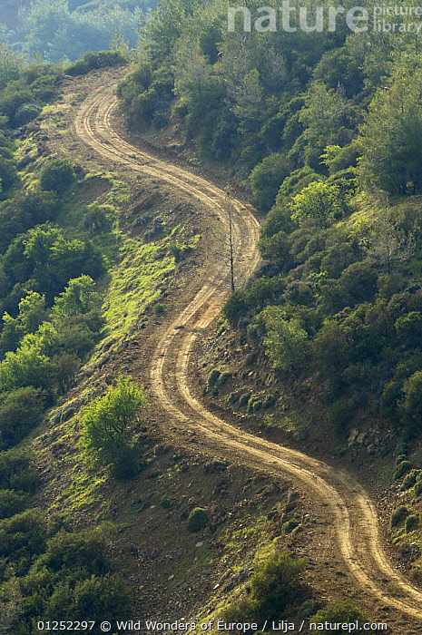 Unpaved road in Troodos mountains, April 2009  ,  CYPRUS,EUROPE,FORESTS,LANDSCAPES,Peter Lilja,ROADS,VERTICAL,WWE,TRODOS  ,  Wild Wonders of Europe / Lilja