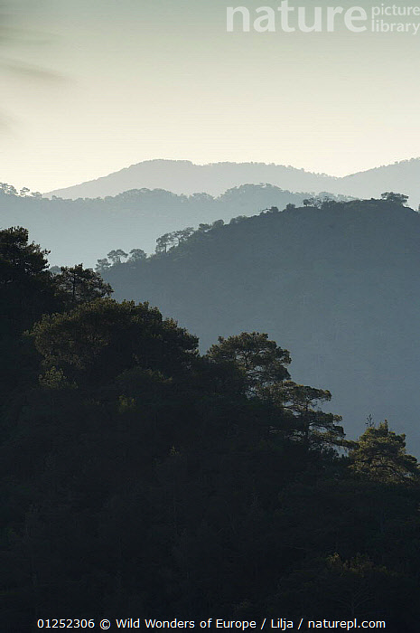 Forest covered hills, Troodos mountains, Cyprus, April 2009  ,  CYPRUS,EUROPE,FORESTS,LANDSCAPES,MOUNTAINS,Peter Lilja,SILHOUETTES,VERTICAL,WWE,TRODOS  ,  Wild Wonders of Europe / Lilja