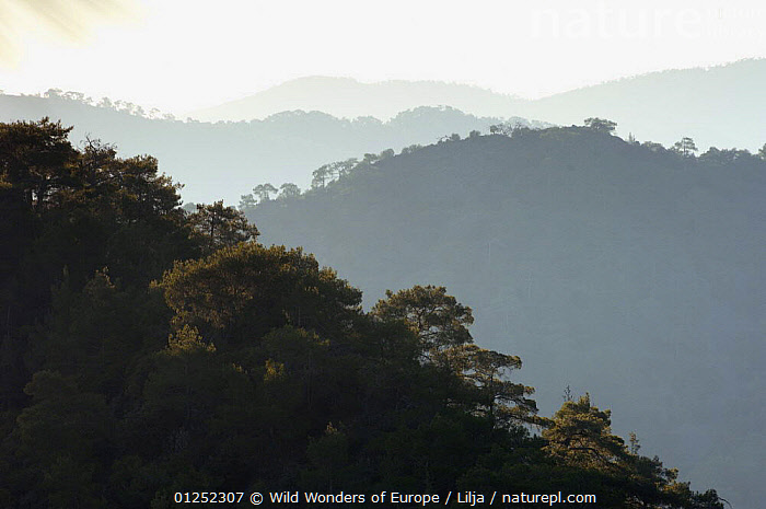 Forest covered hills in Troodos mountains, Cyprus, April 2009  ,  CYPRUS,EUROPE,FORESTS,LANDSCAPES,MOUNTAINS,Peter Lilja,WWE,TRODOS  ,  Wild Wonders of Europe / Lilja