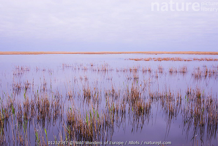 "Lagoon ""Etang du Vaccares"" at dawn, Camargue, France, April 2009  ,  EUROPE,FRANCE,lagoons,LAKES,LANDSCAPES,reeds,Theo Allofs,WETLANDS,WWE  ,  Wild Wonders of Europe / Allofs"