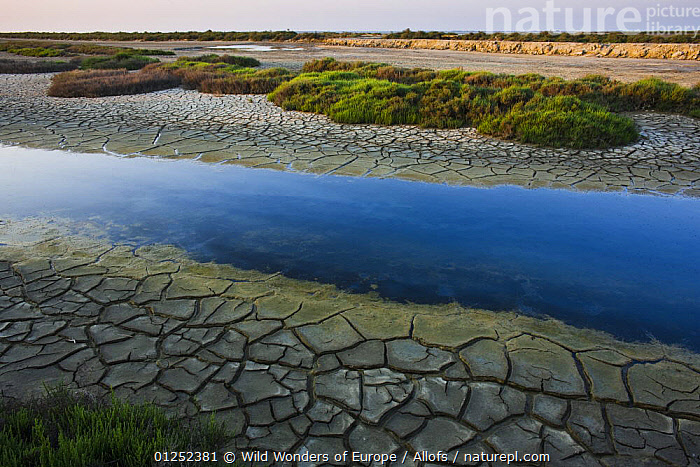 Canal with drought patterns near Etang du Fangassier, Camargue, France, May 2009  ,  droughts,EUROPE,FRANCE,LANDSCAPES,PATTERNS,RIVERS,SOIL,Theo Allofs,WATER,WETLANDS,WWE  ,  Wild Wonders of Europe / Allofs