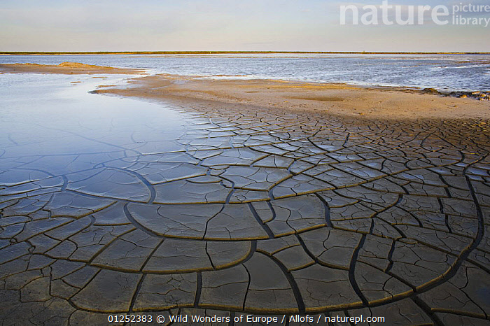 Drought patterns around the lagoon Etang du Fangassier, Camargue, France, May 2009  ,  droughts,EUROPE,FRANCE,lagoons,LAKES,LANDSCAPES,PATTERNS,Theo Allofs,WATER,WETLANDS,WWE  ,  Wild Wonders of Europe / Allofs