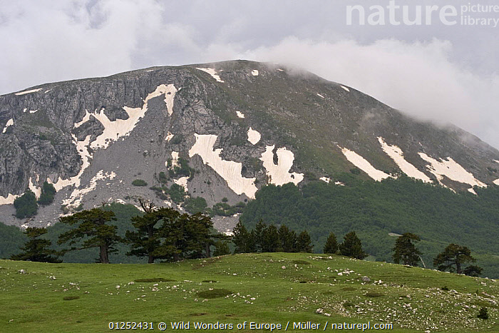 Mountain with patches of snow on it, low clouds, Pollino National Park, Basilicata, Italy, May 2009  ,  CLAUDIA M�LLER,CLOUDS,EUROPE,FORESTS,ITALY,LANDSCAPES,MONTE,MOUNTAINS,NP,PIANA,RESERVE,WWE,Weather,National Park  ,  Wild Wonders of Europe / Müller