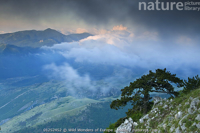 Low clouds over the Pollino National Park, Basilicata, Italy, June 2009  ,  CABALLA,CLAUDIA M�LLER,CLOUDS,DELLA,EUROPE,FORESTS,ITALY,LANDSCAPES,MOUNTAINS,NP,RESERVE,ROCKS,TREES,VALLONE,WWE,Weather,National Park,PLANTS  ,  Wild Wonders of Europe / Müller
