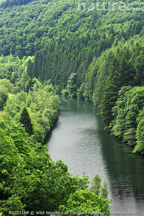 View from the Esch-Sur-S�re dam of the River Sauer flowing through a forest, Oesling, Ardennes, Luxembourg, May 2009, EUROPE,FORESTS,JESPER T�NNING,LANDSCAPES,LUXEMBOURG,RIVERS,VERTICAL,WWE, Wild Wonders of Europe / T�nning