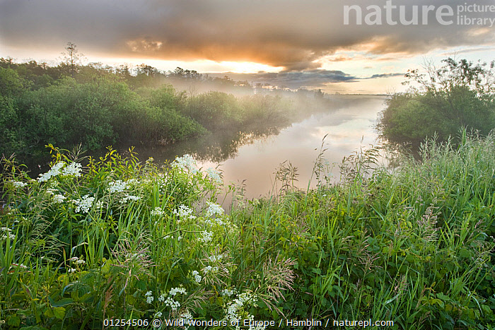 Dawn light over wetland habitat, Nemunas Regional Reserve, Lithuania, June 2009  ,  BALTIC,CIS,EUROPE,FLOWERS,LANDSCAPES,LITHUANIA,MARK HAMBLIN,MIST,REFLECTIONS,RESERVE,WATER,WETLANDS,WWE,WEATHER  ,  Wild Wonders of Europe / Hamblin