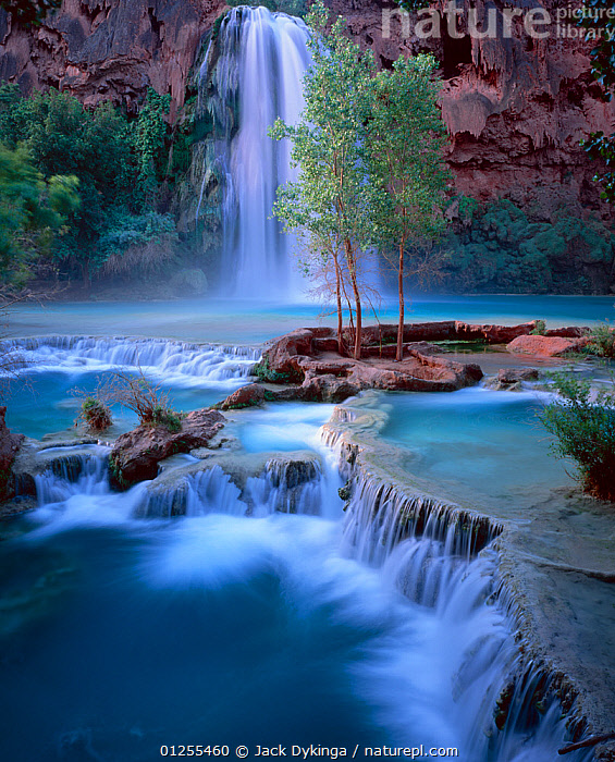 Havasu Falls with travertine formations in the river creating spillways, and Fremont cottonwood trees (Populus fremontii), dawn, Havasupai Reservation, Arizona, USA  ,  BLUE,DAWN,DICOTYLEDONS,LANDSCAPES,NORTH AMERICA,PLANTS,POPLAR,RIVERS,ROCK FORMATIONS,ROCKS,SALICACEAE,TREES,USA,WATER,WATERFALLS  ,  Jack Dykinga
