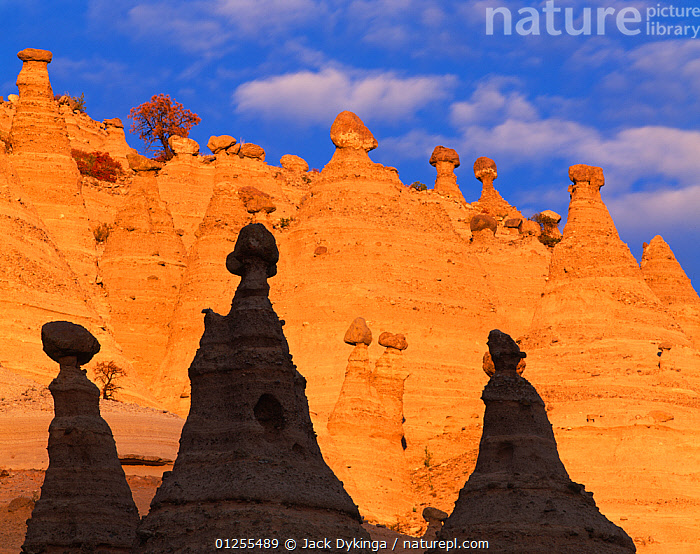 Tent rocks in the Peralta Canyon, New Mexico, USA. Rocks are conical formations of eroded volcanic tuff and pumice supporting 'cap rocks'.  ,  arid,cap rock,CATALOGUE2,conical,contrasts,EROSION,GEOLOGY,LANDSCAPES,LOW ANGLE SHOT,nature,New mexico,Nobody,outdoors,Peralta Canyon,Physical Geography,pumice stone,RESERVE,rock formation,ROCK FORMATIONS,shadows,Tent Rocks,tuff stone,USA,volcanic rock,North America  ,  Jack Dykinga